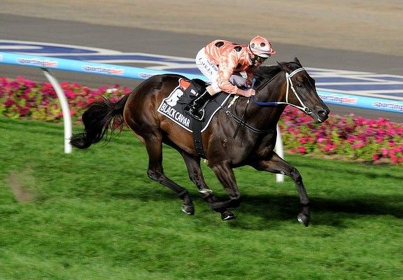 Latest Horse Racing Results News Form Guide Betting Odds Black Caviar Horse Racing Results Black