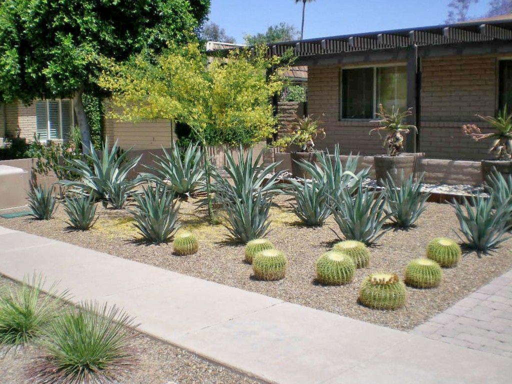 xero.pro | Modern Garden Landscape Design - Phoenix, Scottsdale - Xero.pro Modern Garden Landscape Design - Phoenix, Scottsdale