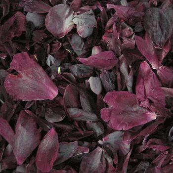 FiftyFlowers.com - Dark Eggplant Peony Petals