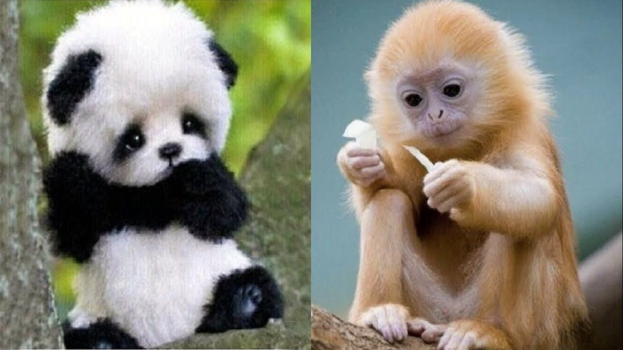 50 Cutest Baby Animals Cute Baby Animal Videos Funny Baby