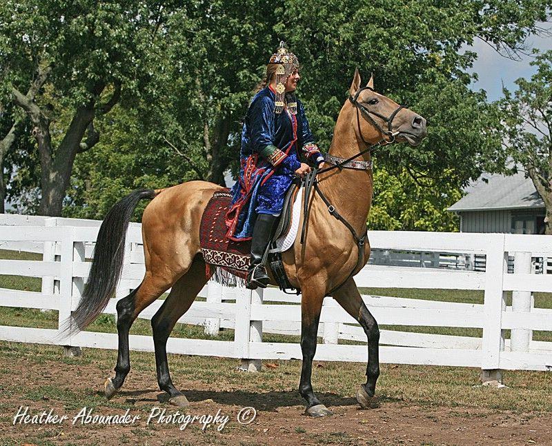 The Akhal Teke Stallion, Magnatli - Akhal-Teke - Wikipedia