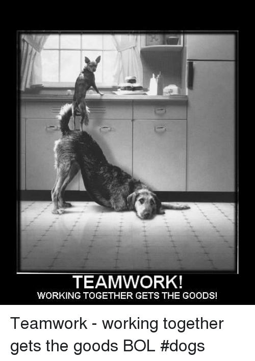 Dogs Memes And Teamwork Working Together Gets The Goods Teamwork Working Together Get Teamwork Quotes Funny Motivational Quotes Funny Teamwork Quote
