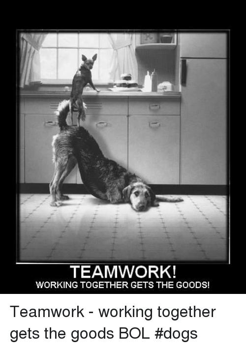 Funny Teamwork Memes : funny, teamwork, memes, Dogs,, Memes,, 🤖:, TEAMWORK!, WORKING, TOGETHER, GOODS!, Teamwork, Working, Together, Quotes,, Funny, Motivational