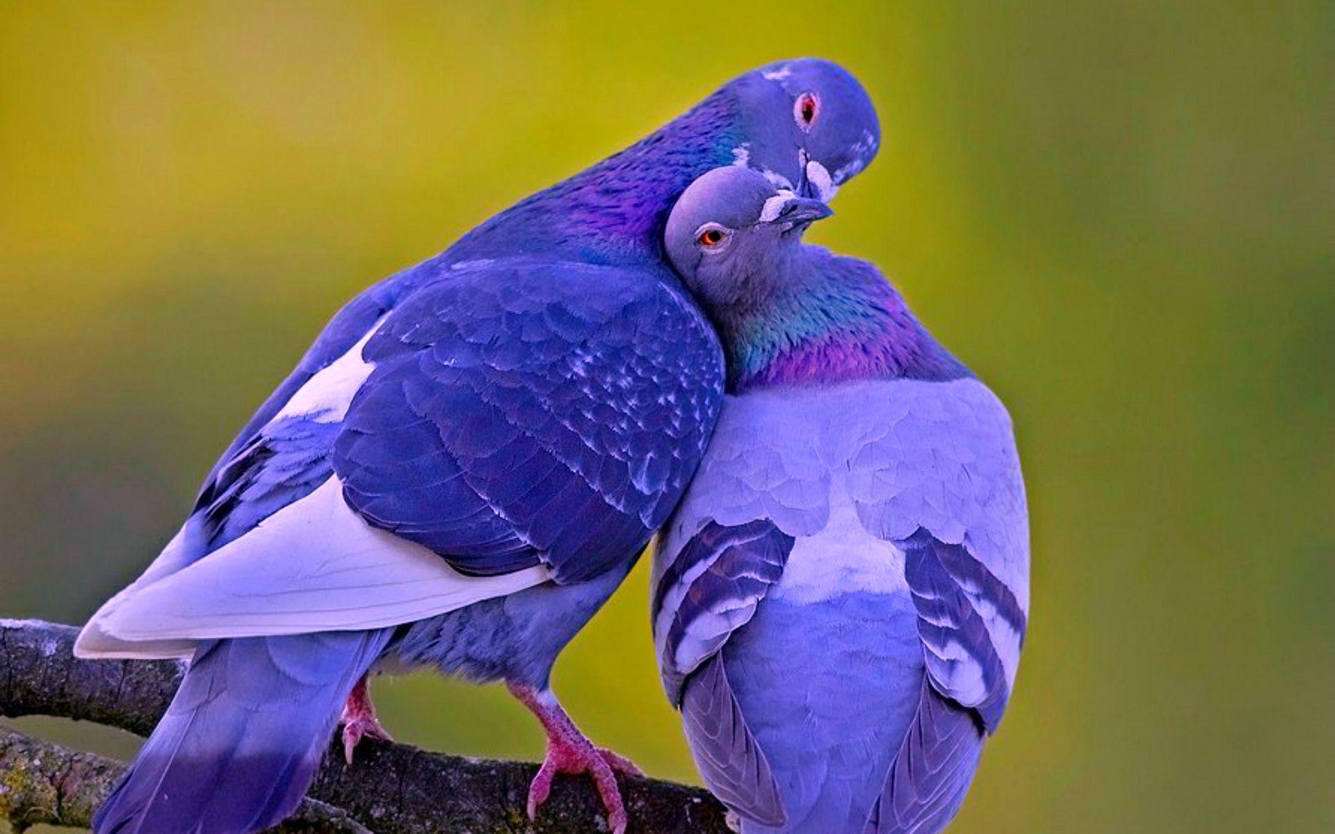 Pin By Maria Del Carmen Sandoval On Kus Animals Beautiful Animals Pet Birds