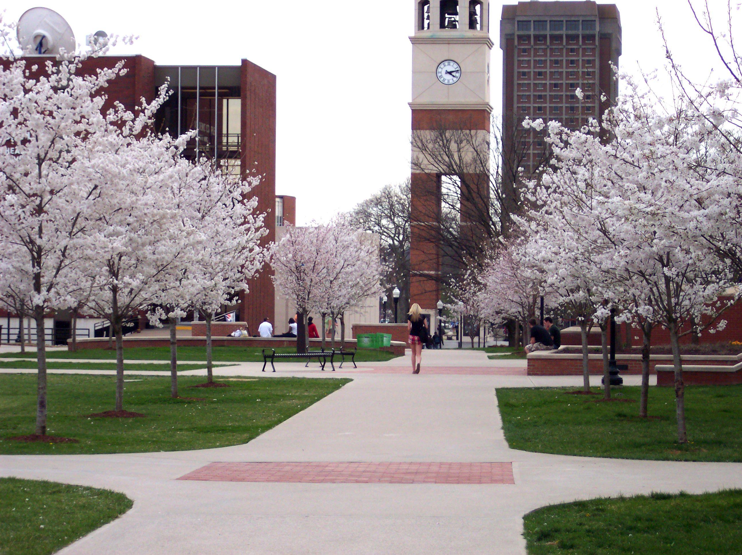 Cherry Tree Rows April At Wku Western Kentucky University University Campus College Campus