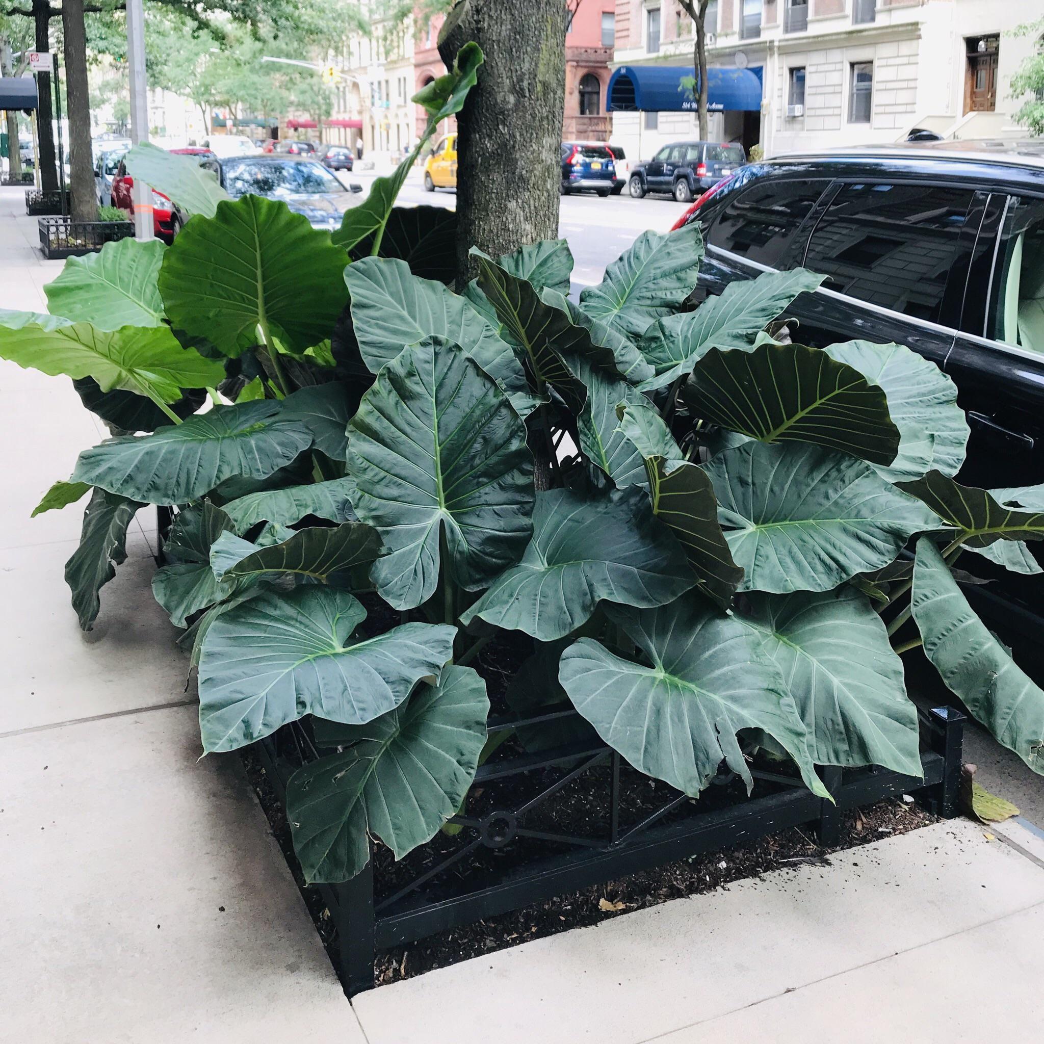 Beauty on my walk yesterday uws nyc plant fungus nyc