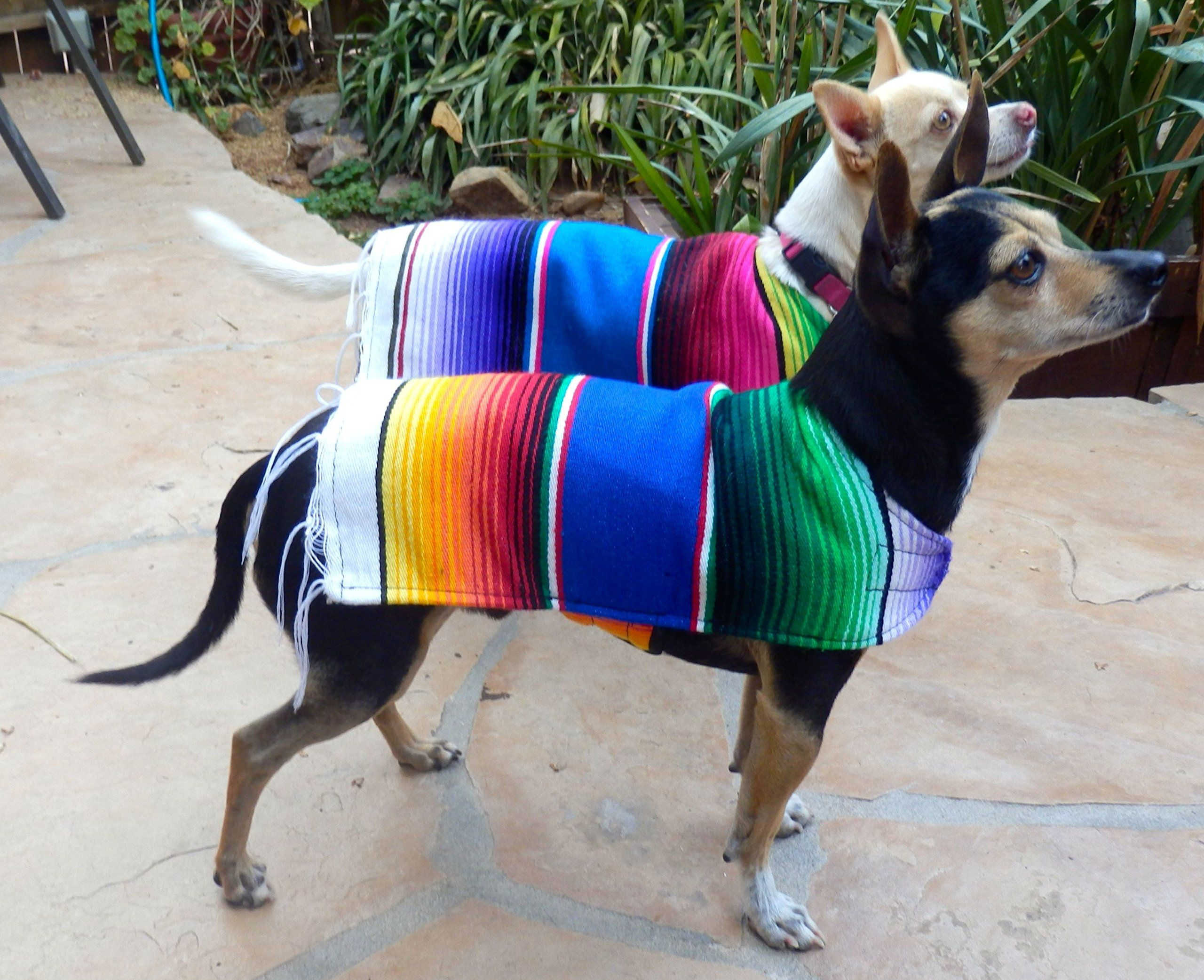Amazon Com Chihuahua Clothes Handmade Dog Poncho From