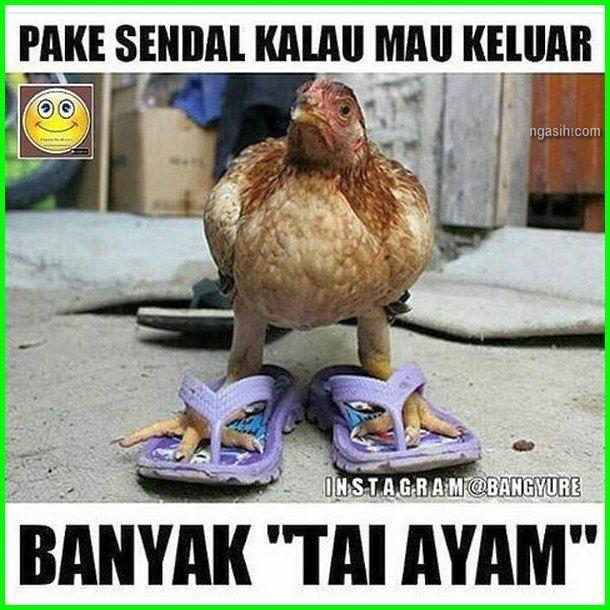 89+ Jenis Gambar Lucu Ayam Terlihat Cantik
