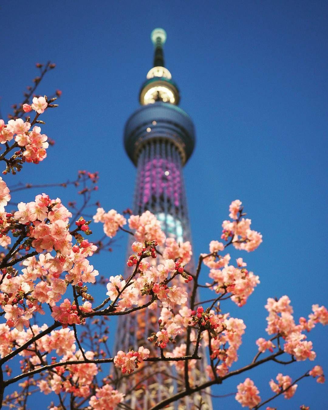 桜 #東京都 #スカイツリー #tokyoskytree #skytree #ライトアップ #夜景 #桜