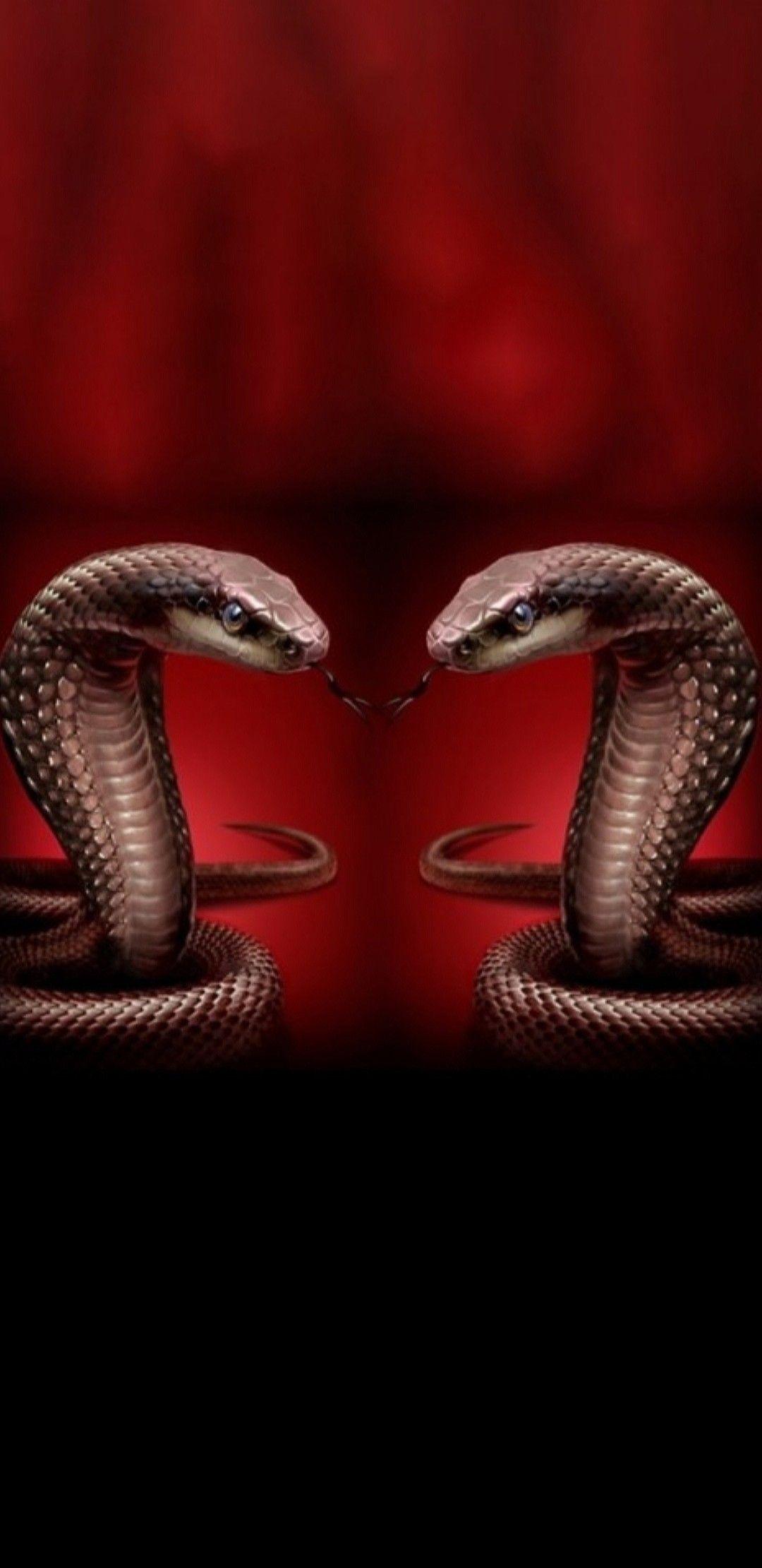 Idea by NikklaDesigns on Snake Wallpaper Snake wallpaper