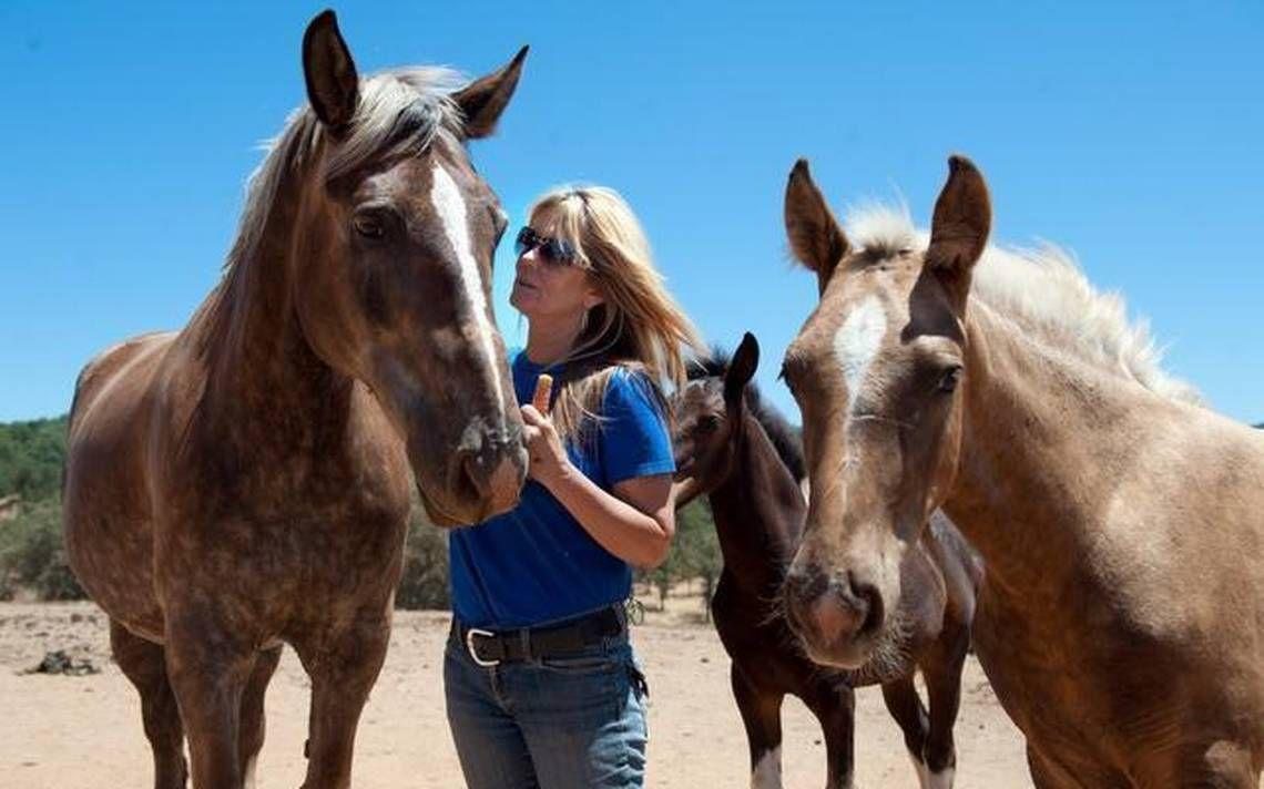 17++ El dorado county animal control images