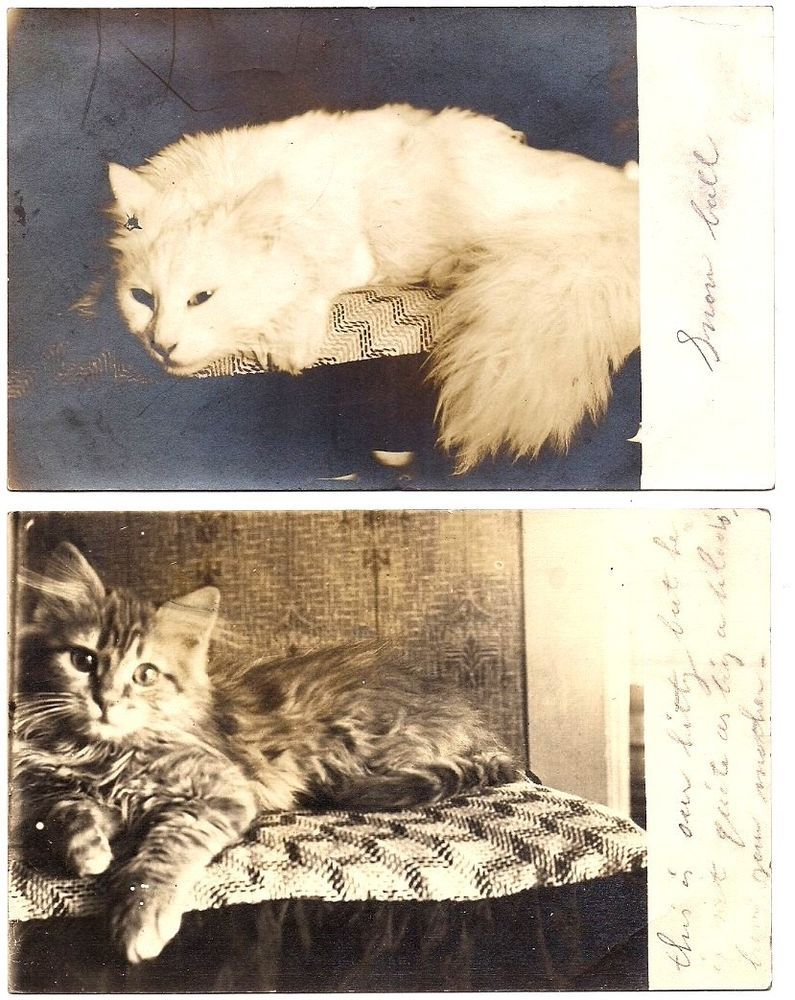 2 Coopersville Michigan, THE FAMILY CATS, 1914 RPPC Postcards