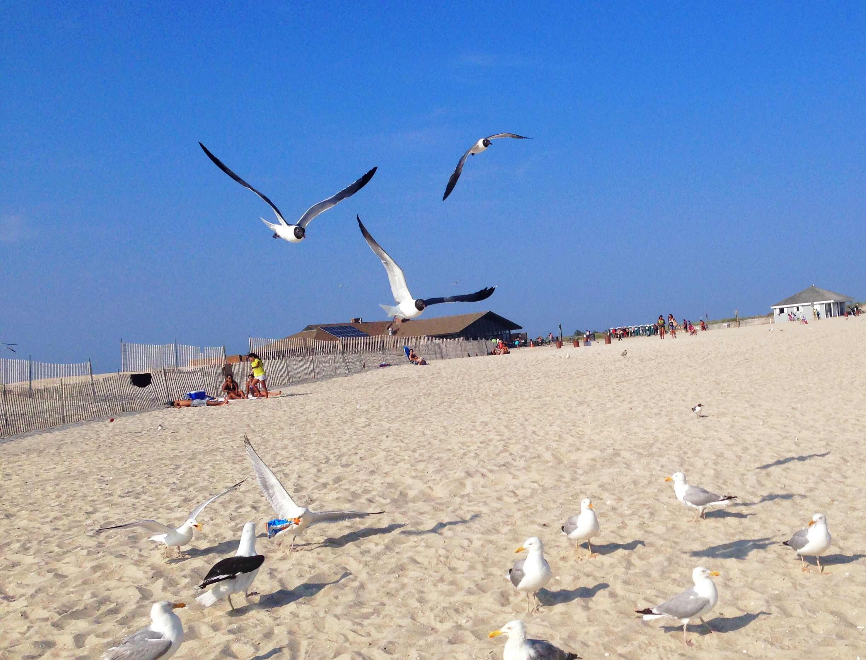 Robert Moses Beach 5