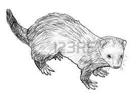Resultado De Imagen Para Huron Dibujo Drawings Ferret Linocut