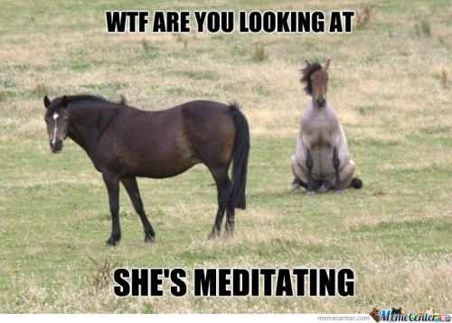horse memes - Google Search | Equestrian Humor | Funny ...