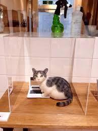 Картинки по запросу 猫ラボ