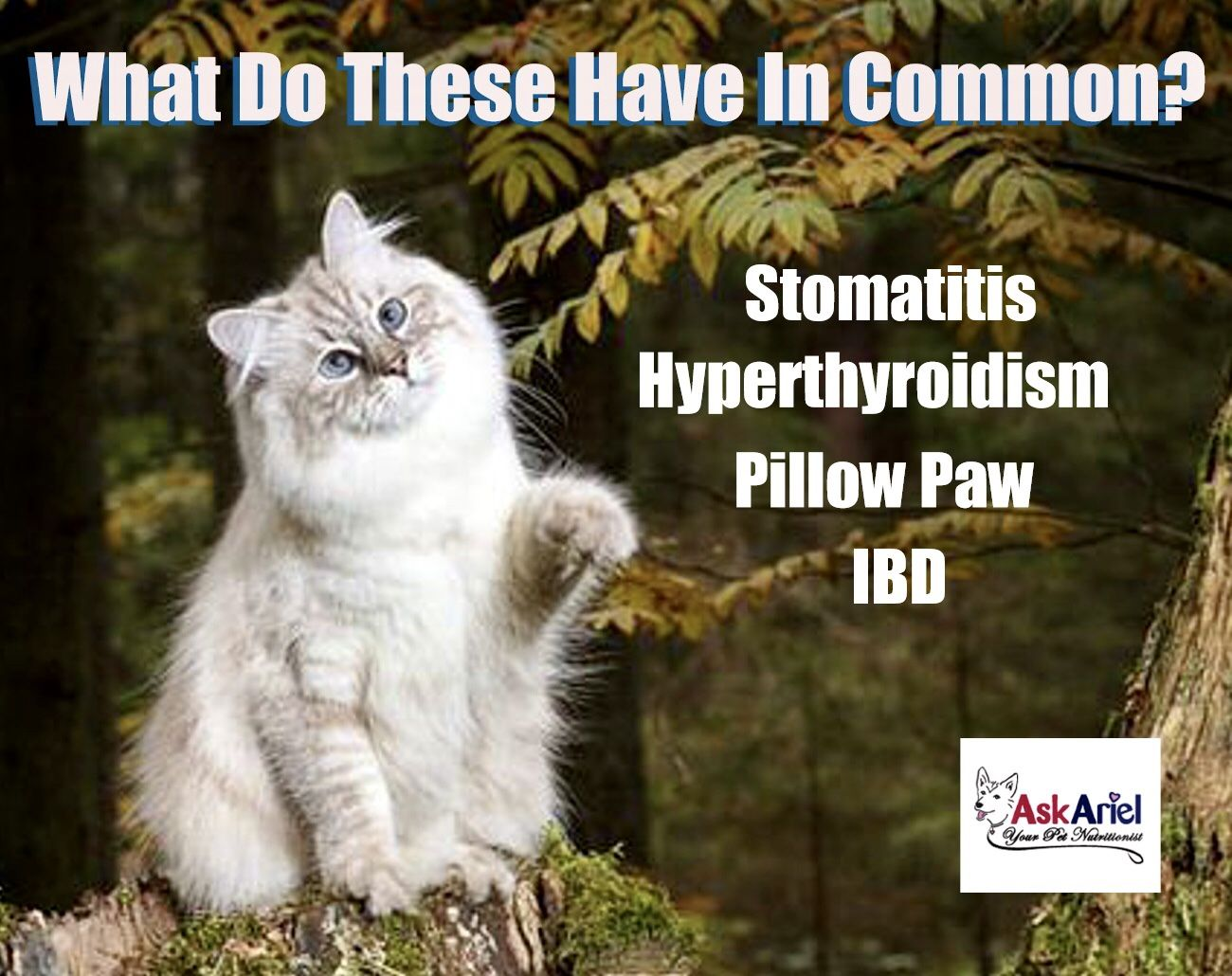 Autoimmune conditions such as Stomatitis, Pillow Paw