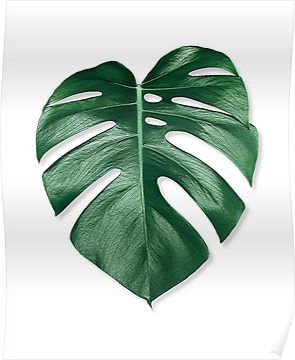MONSTERA LEAF Poster by NORDIKART