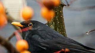 Pin Von Sylvia Z Auf Heimische Vogel Heimische Vogel Vogel Und