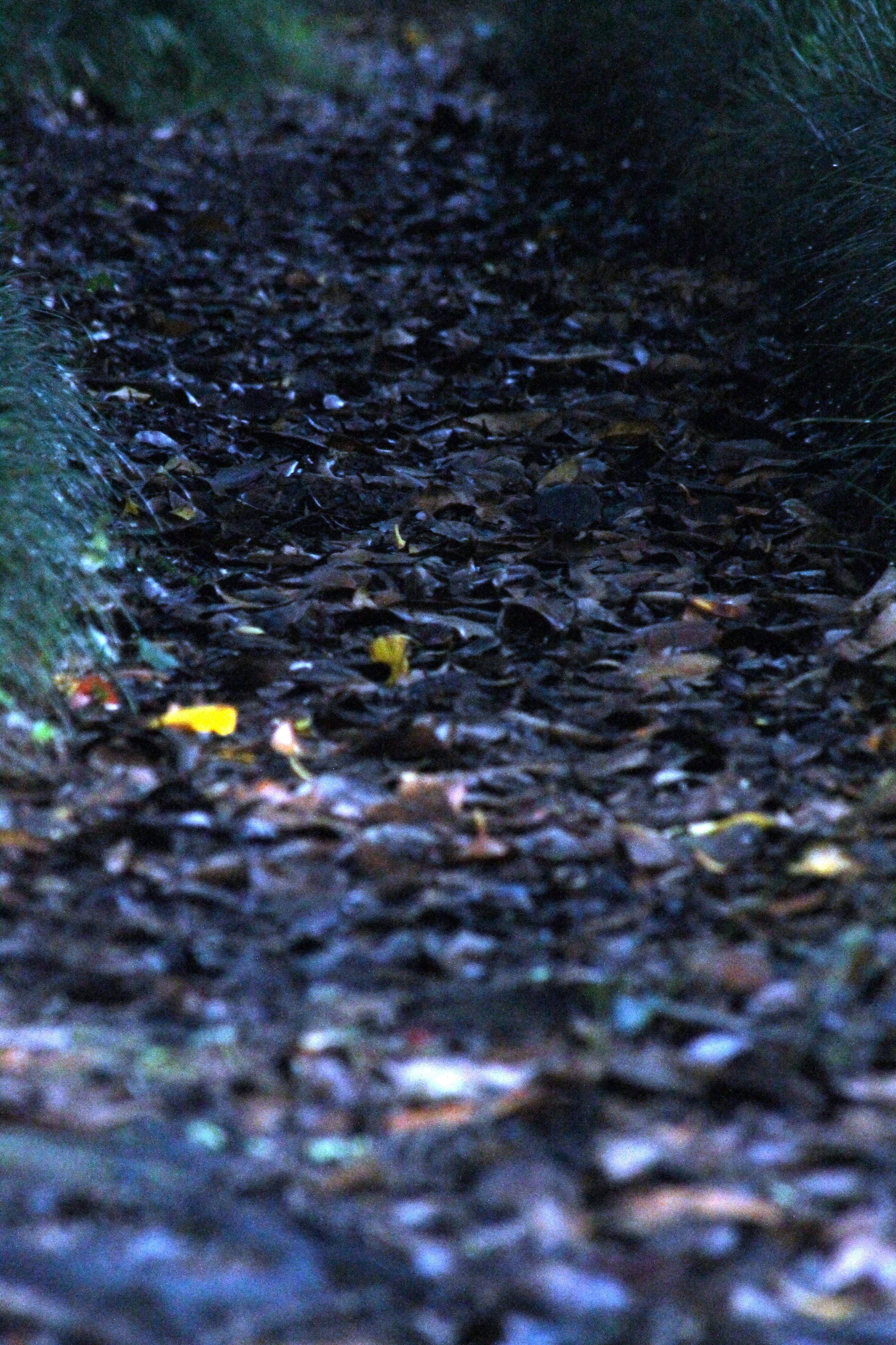 Hojarasca en los caminos en otoño.