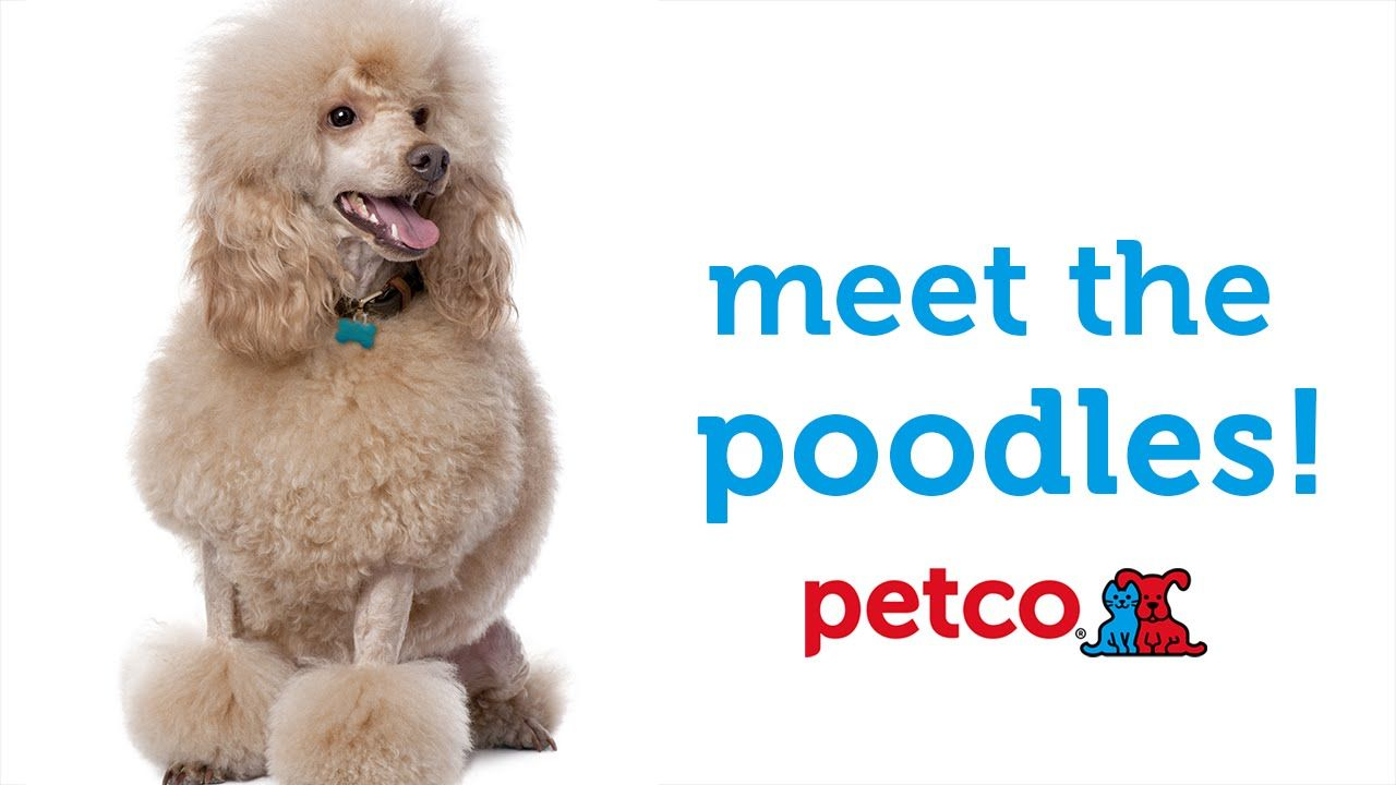 Petco offers a variety of pet supplies and pet food. Shop