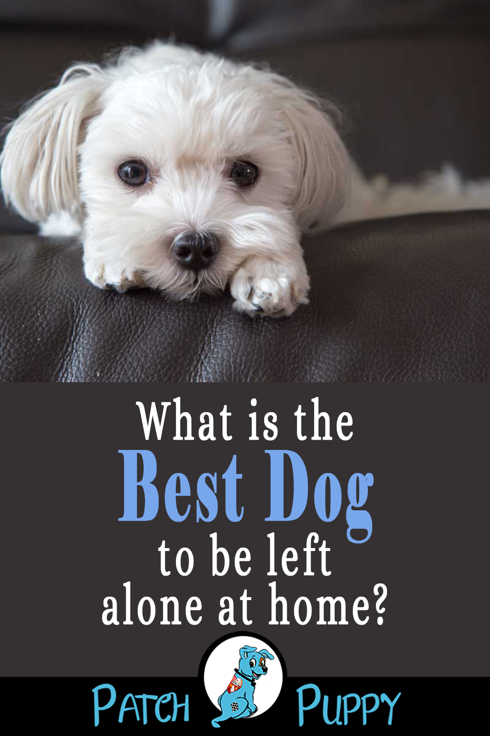 12 Dog Breeds That Can Stay Home Alone Dog breeds, Dogs