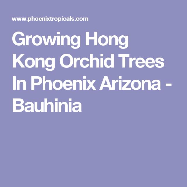 Growing Hong Kong Orchid Trees In Phoenix Arizona - Bauhinia