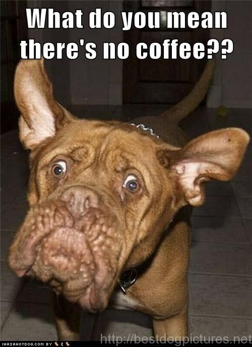 you do realize that caffeine is bad for dogs