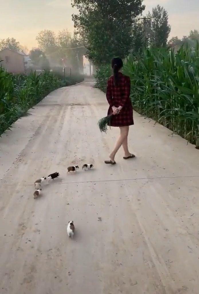 Cute guinea pigs 😘