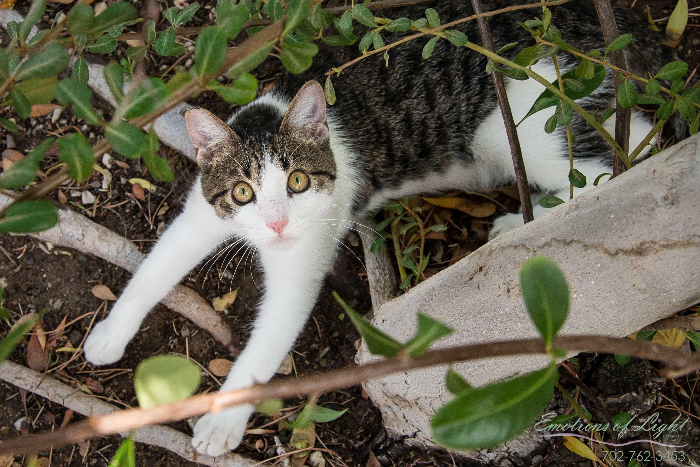 Lost Cat Male Paso Robles Ca Usa 93446 Cats Lost Cat