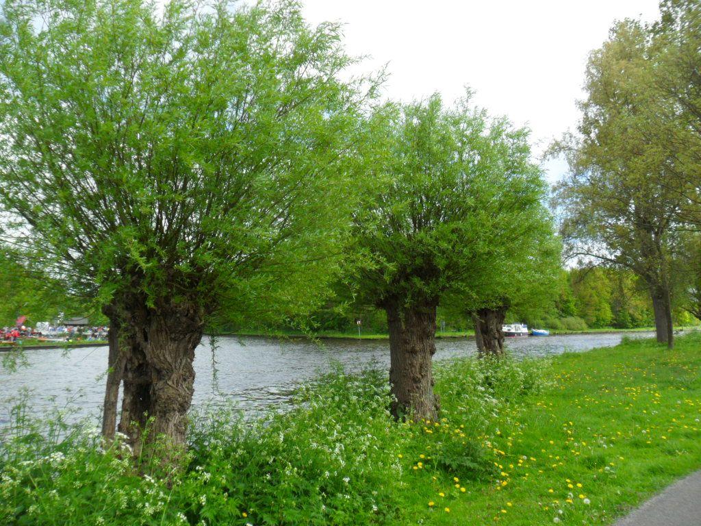 Groen 8935  t.h.v. Waterbies 71 Groen 2015
