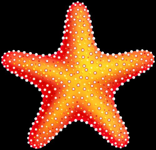 Starfish Png Clip Art Starfish Clipart Clip Art Starfish