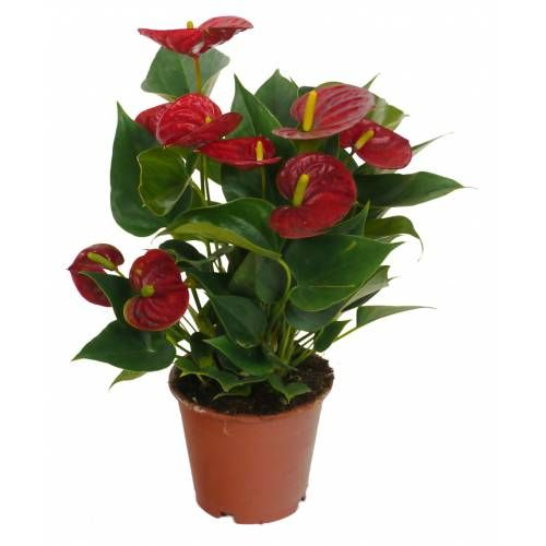 plantas de interior - Buscar con Google | Jardinería | Pinterest ...