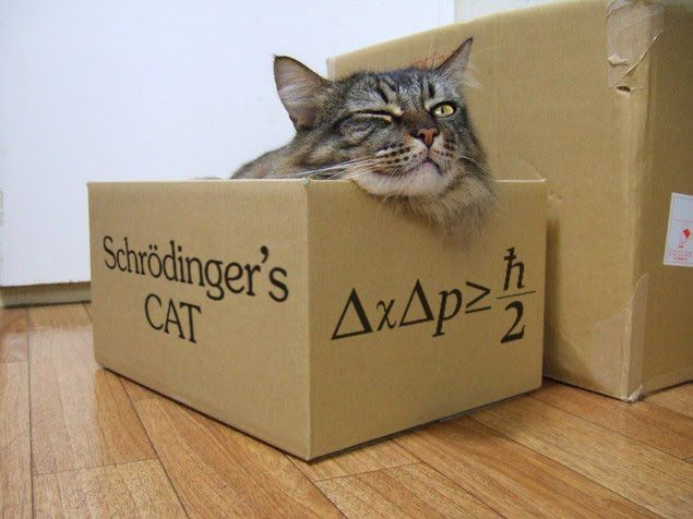 Image result for schrodinger cat