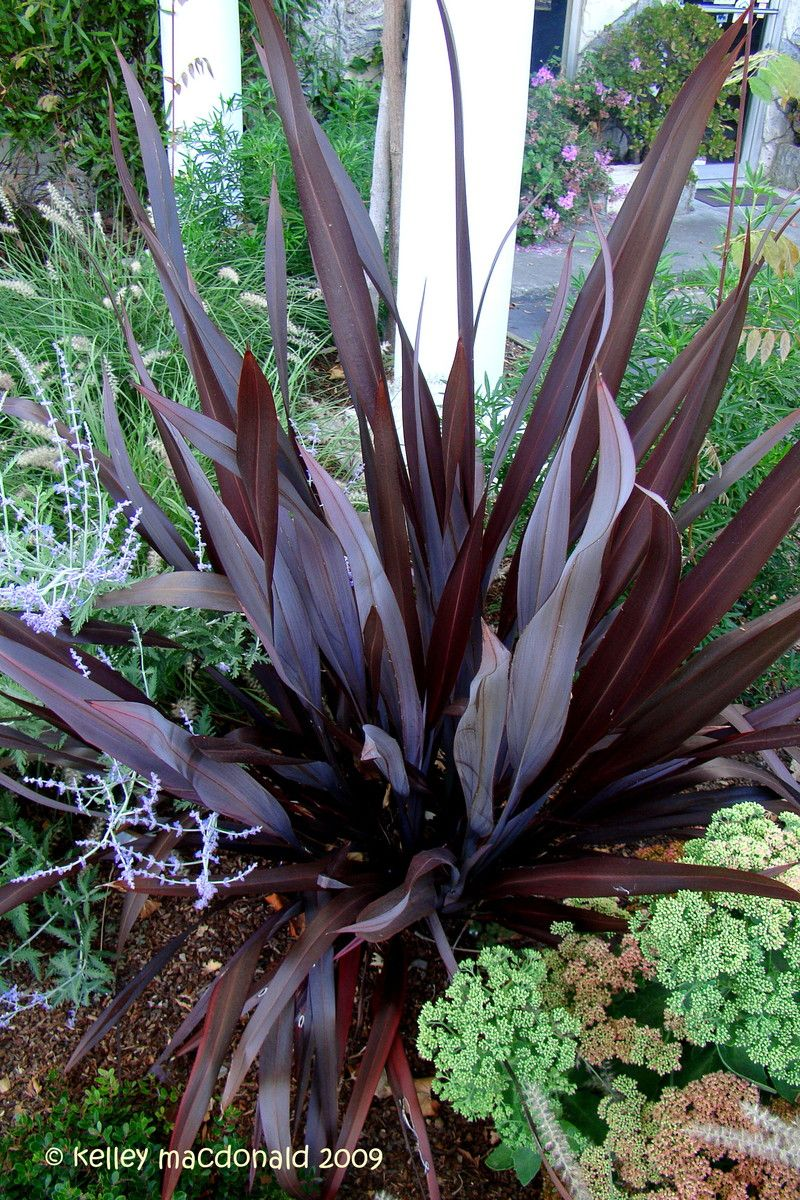 Pin By Belle Starr On In The Garden New Zealand Flax Plants Native Garden