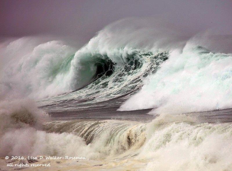 High Surf Curl