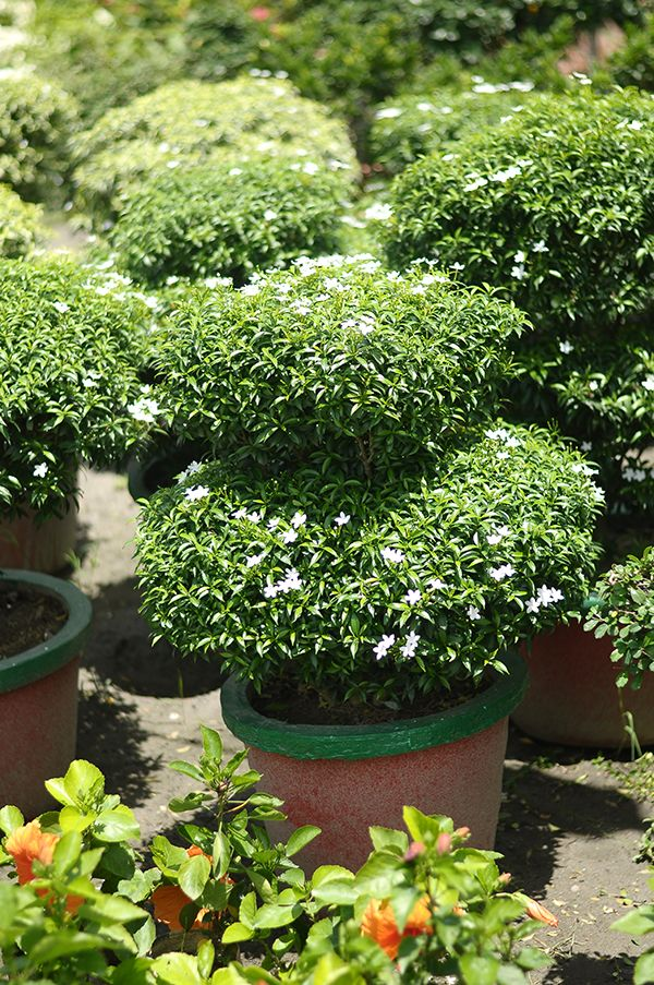 beauteous house plants names. Plan Name  Chenise Tagar Plant Type Semi Outdoor Day Light Yes A