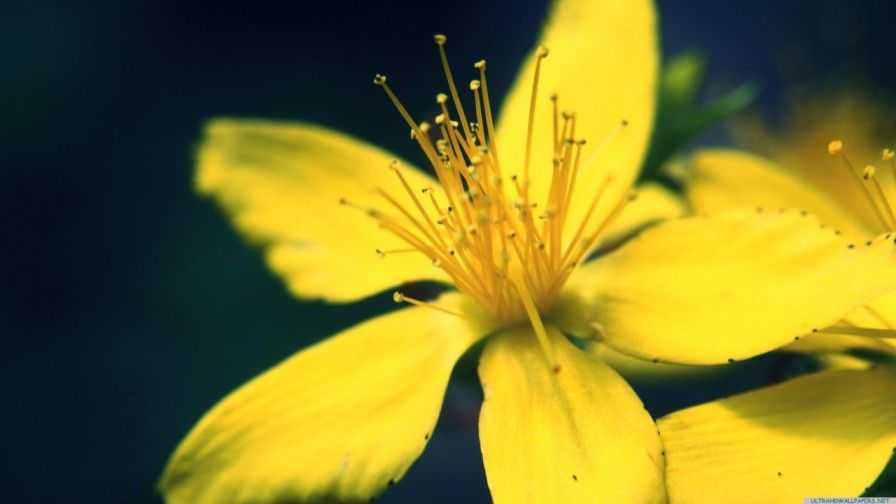Beautiful Nature Hd 3d Wallpapers Collection 2014 Yellow Flower Wallpaper Ipad Air Wallpaper Flower Wallpaper Fantastic yellow flower hd wallpaper