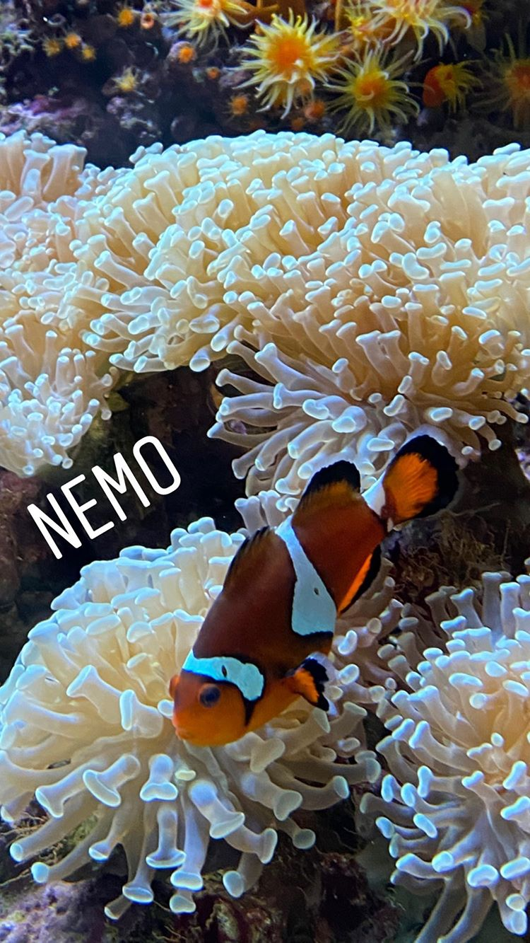 Instagram in 2020 | Fish pet, Pets, Animals