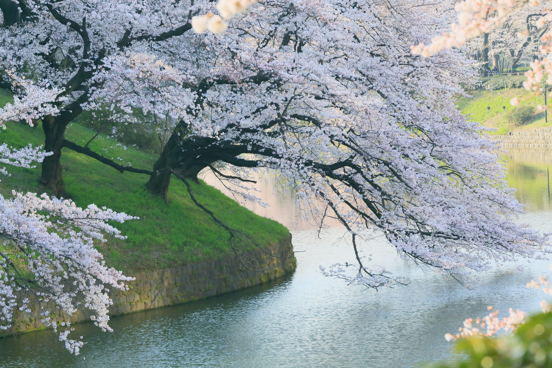 Best ideas about Nature Desktop Wallpaper on Pinterest ×