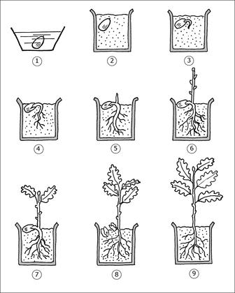 Plantation et germination d une graine illustration 1 d couverte du monde pinterest - Comment faire germer des graines de tomates ...