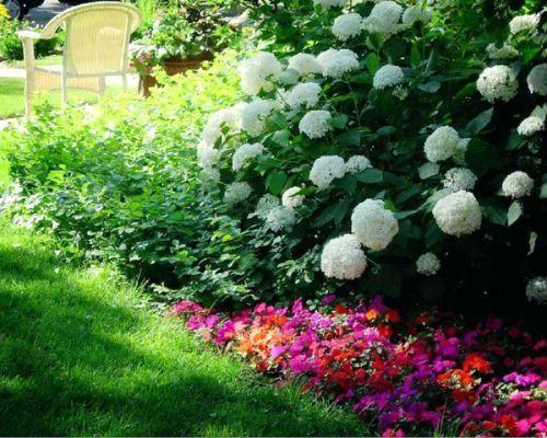 Shade Garden Plants Zone 7 Wishbone | Shade garden plants ...