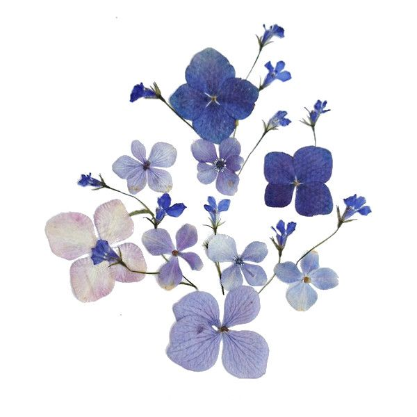 Hand Painted Blue Watercolor Flower Png Transparent Acuarela Floral Flores Acuarela