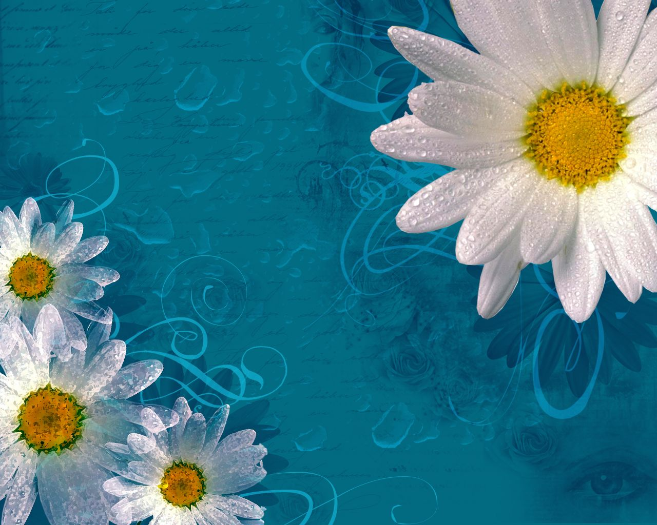 backdrops for photography | Delicate daisies flowers frame 800x600 pixel PPT Backgrounds for ...