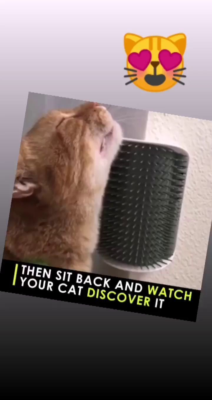 Add some catnip and watch your cats fall in love. in 2020