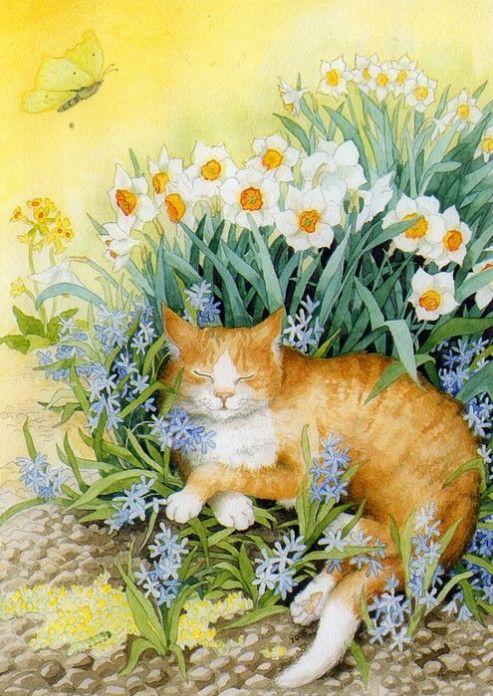 Inge Look cat1