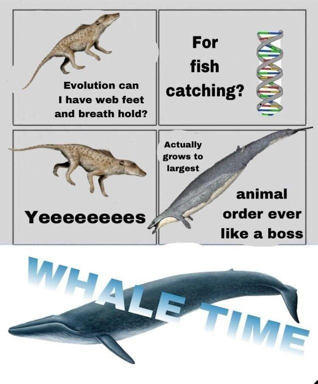 Trending Dank 'Evolution' Memes Will Make You Want To Defy Your Biological Destiny #prehistoricanimals