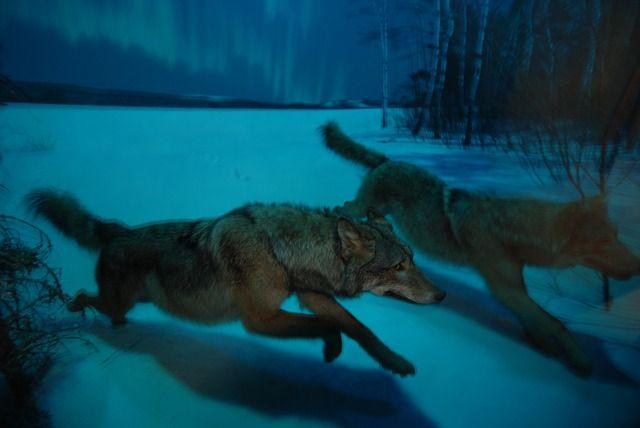 The Silver Bullets pack - midnight winter hunt (Dogs, Bats & Monkeys Series)