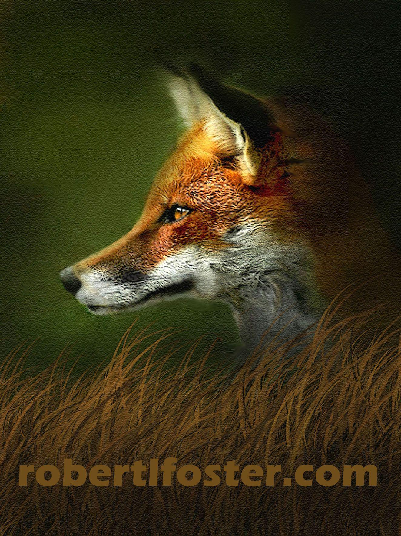 Red Fox Profile Stuff to Buy