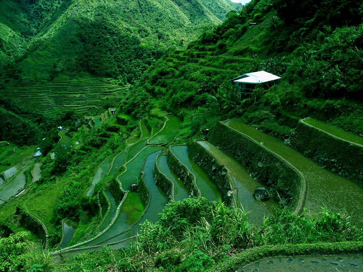Cordilleras Philippines So GREEN D Banaue rice terraces